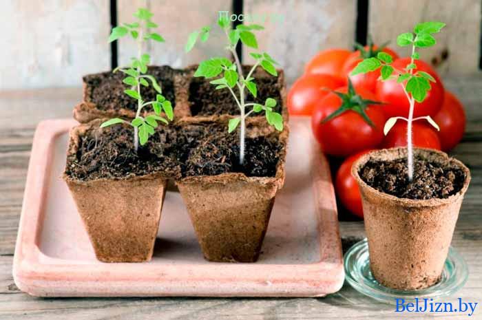 календарь садовода для Беларуси на январь 2020 года