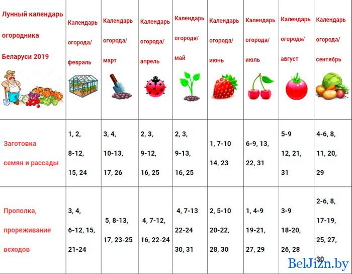 календарь садовода для Беларуси